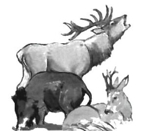 Wildgruppe-1